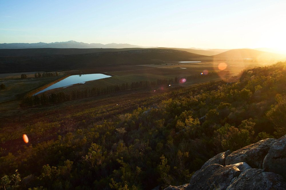 Sunset in the Langkloof Valley, where Honeybush is sustainably cultivated