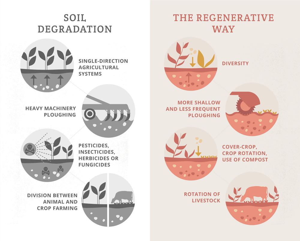 Regenerative agriculture explained