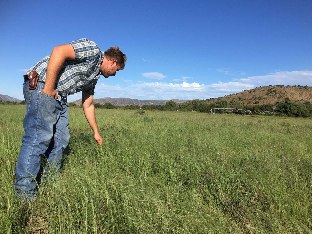 Daniel Fourie in a poly-crop field of rosemary and various cover crops