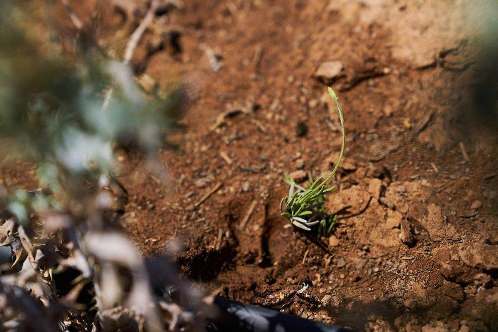 The bigger dream of restoring the soils
