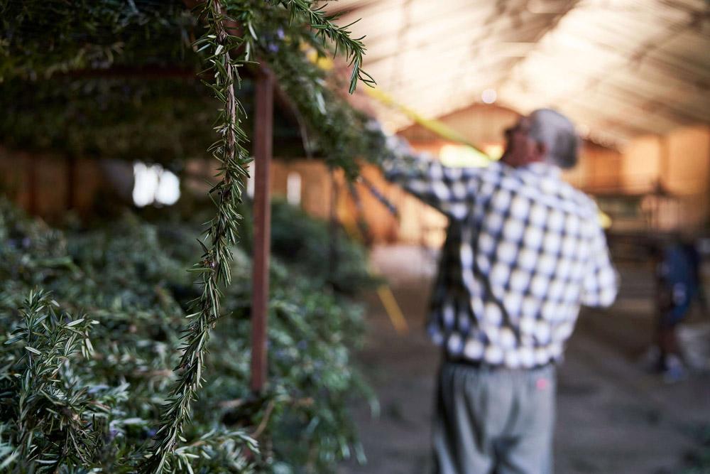 Dried Rosemary in Baviaanskloof