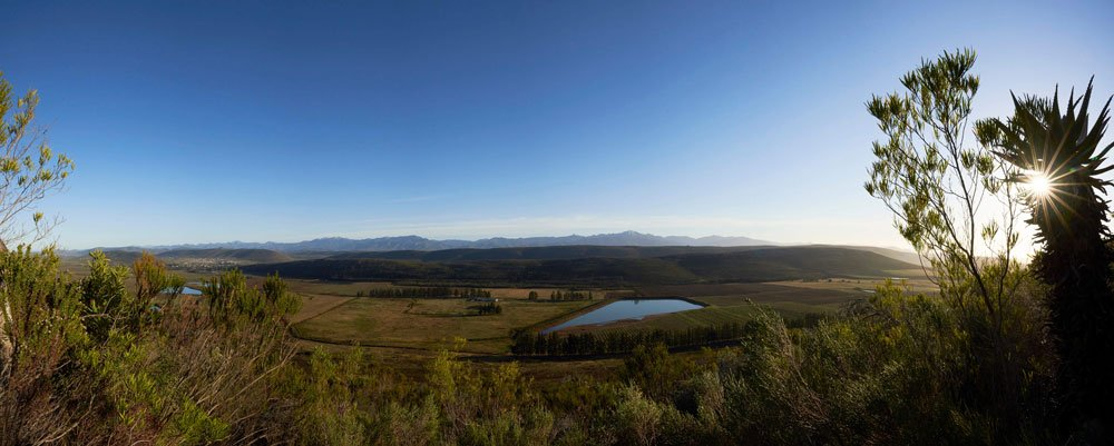 Honeybush in the Langkloof landscape