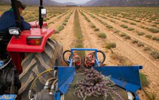 Regenerative Agriculture in the Baviaanskloof