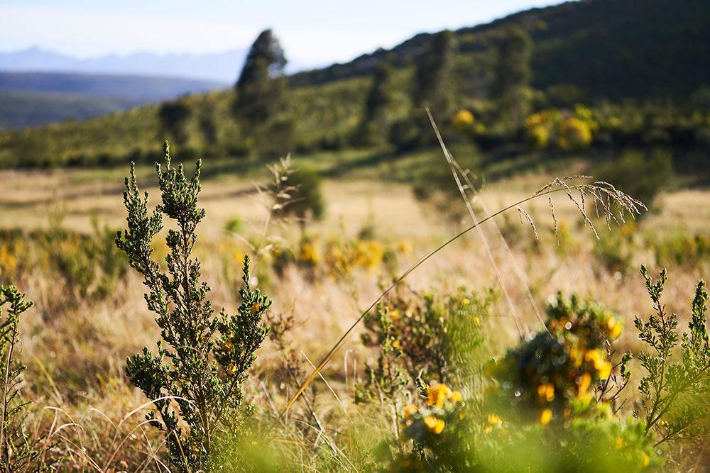 Healthy vegetation on a hillside.