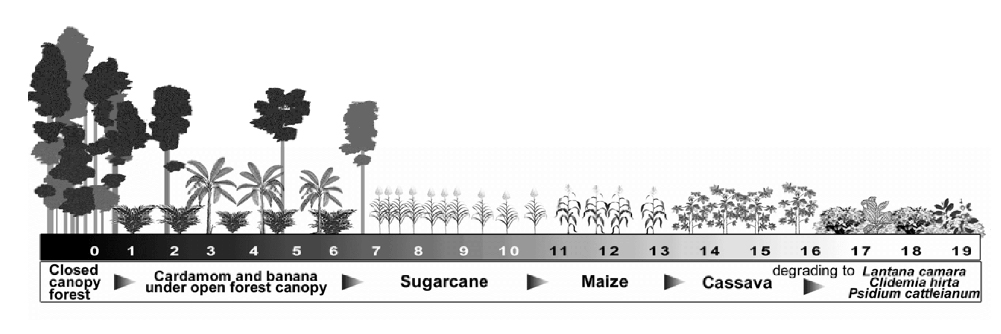Infographic describing how forests degrade due to the introduction of various cash crops.