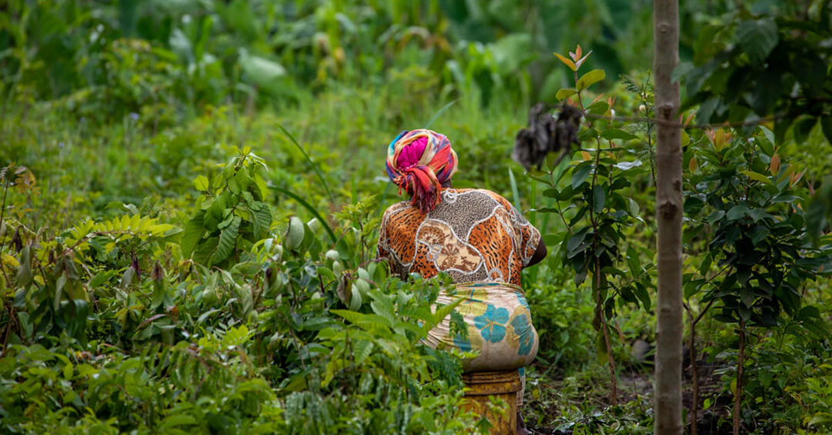 Woman walking through spice crop plantation.