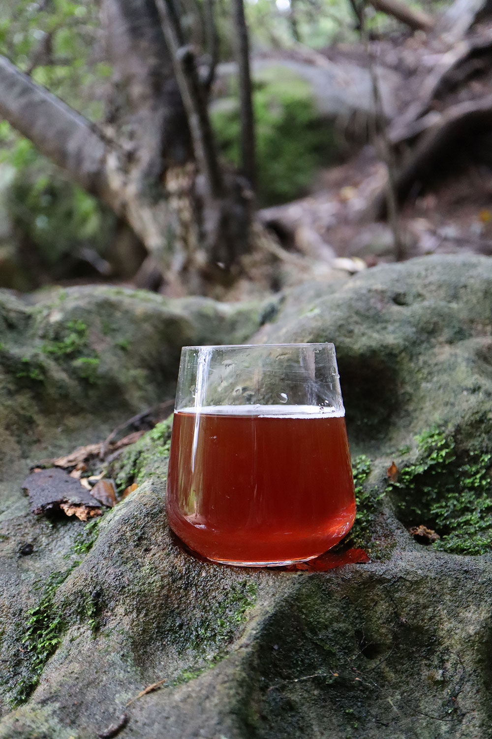 A glass of orange-red coloured honeybush tea on a mossy rock.