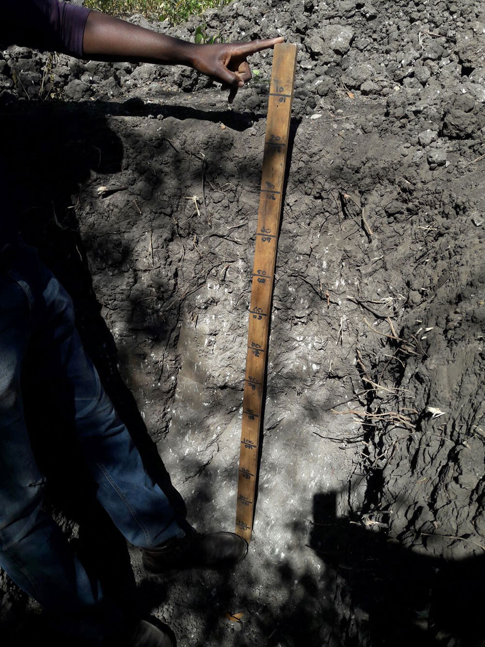 Hand holding measuring stick in a soil pit.